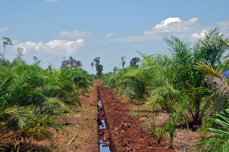 Palm oil plantation works.jpg