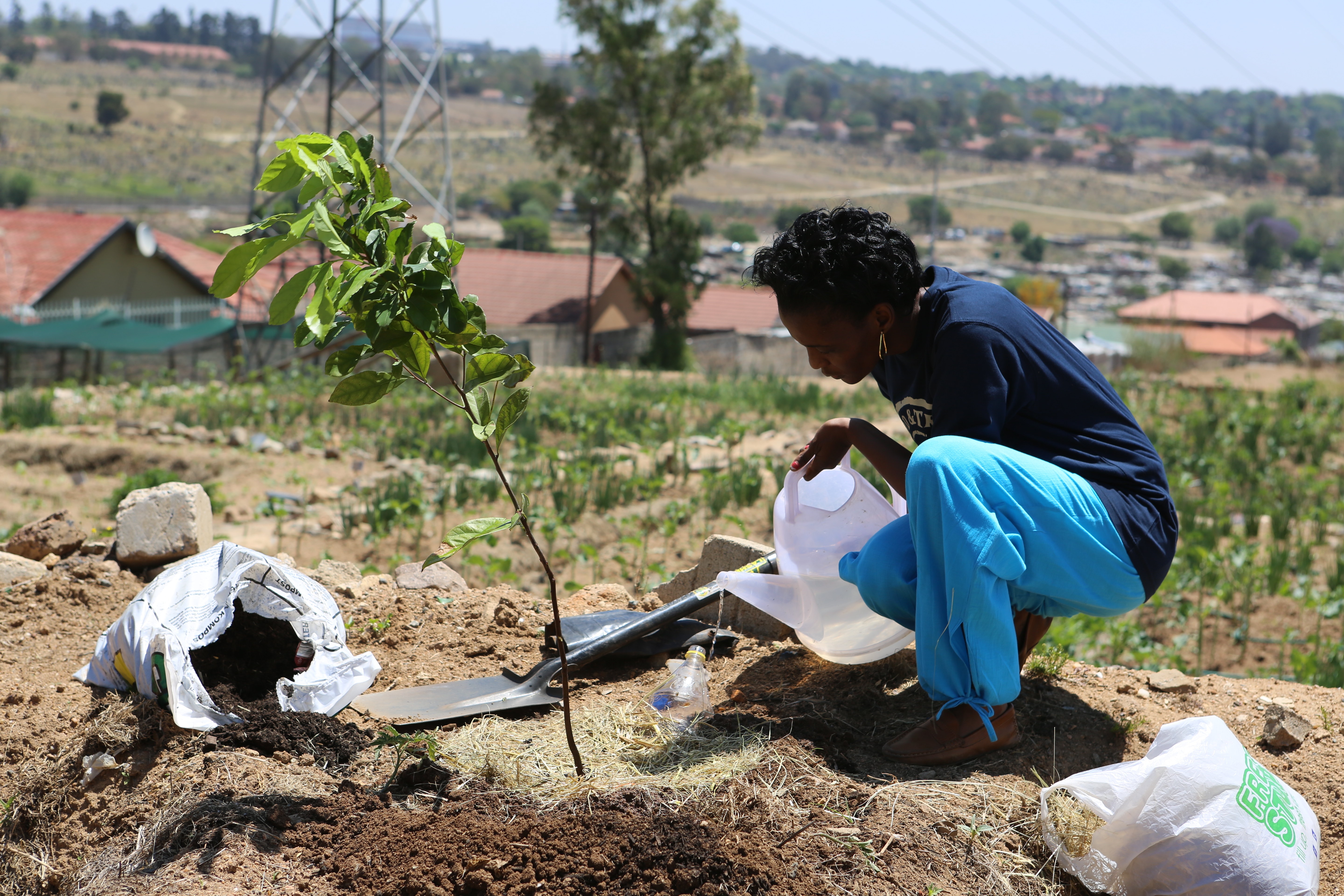 Food_and_Trees_for_Africa.jpg