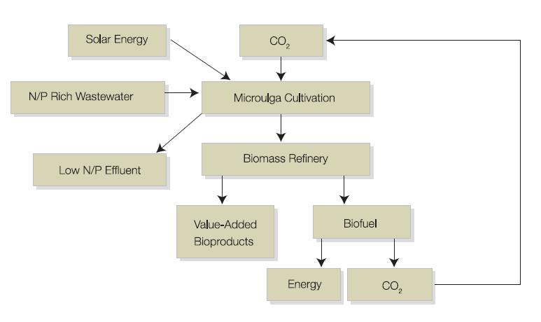 Micro-algae for mitigating carbon dioxide   Climate