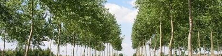 Agro-forestry (mitigation)