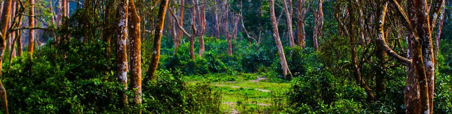 Nepal agroforestry