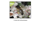 Basic Beekeeping Manual 1 Part 02: The life of the bee